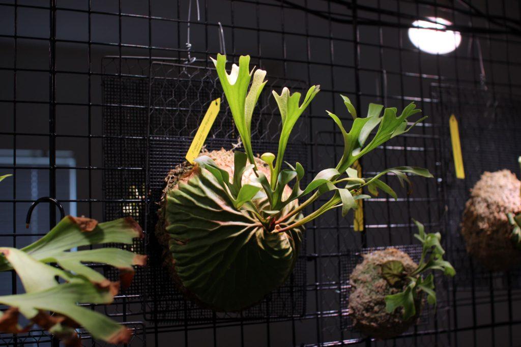 IKEA 植物育成ライト